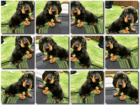 Images Augmentation for Deep Learning with Keras